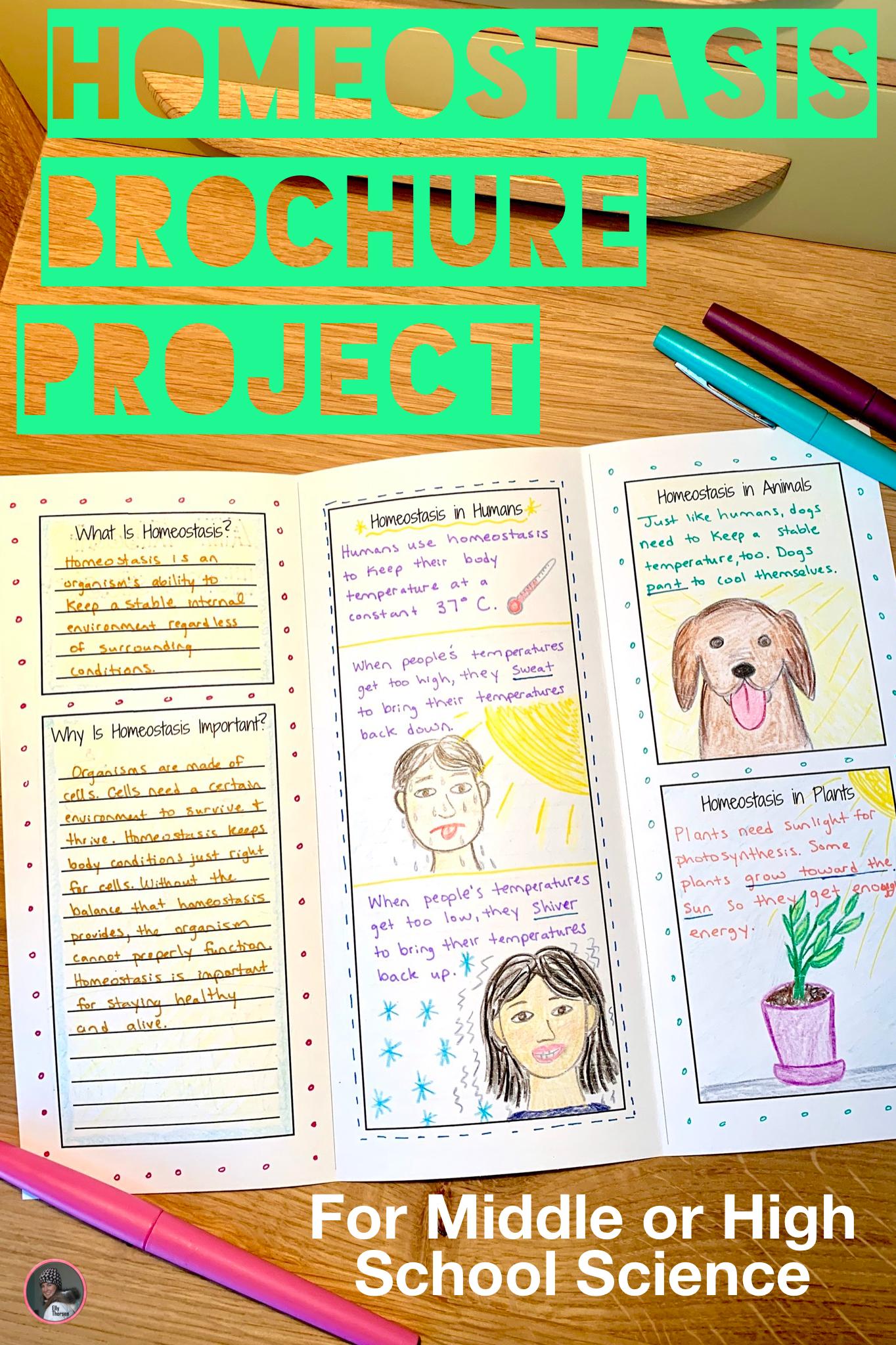 Homeostasis Brochure Project