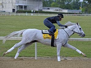 Hansen is another horse I am rooting for in the Kentucky Derby