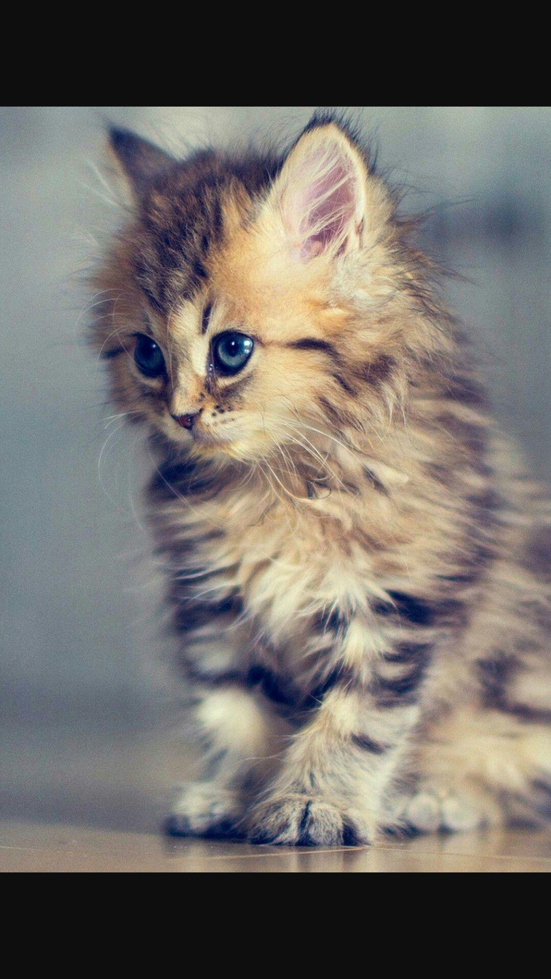 I love cats sooooooooooooo much cats cats cats pinterest