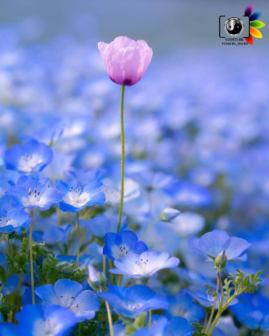 Congratulations Tebrikler PhotobyFotograf @astrailor_jp SeçimSelected by@bhrtunc lütfen bizi takip edin @vizorturk_flower_macro lütfen tagımızı kullanın #vizorturk_flower_macro KARDEŞ SAYFALARIMIZ @vizorturk_hdr @vizorturk_best @vizorturk_dream @vizorturkiyem #flower_igers #flowers_mania__ #flowersandmacro #turklikeben_macro #macro_turkey #ir_flowers_macro #kings_macro#macro_vision #bns_macro #funda_flowers #flowers_super_pics #turkobjektif_macro #flowers_world26 #flowerschannel #flowers_andlife