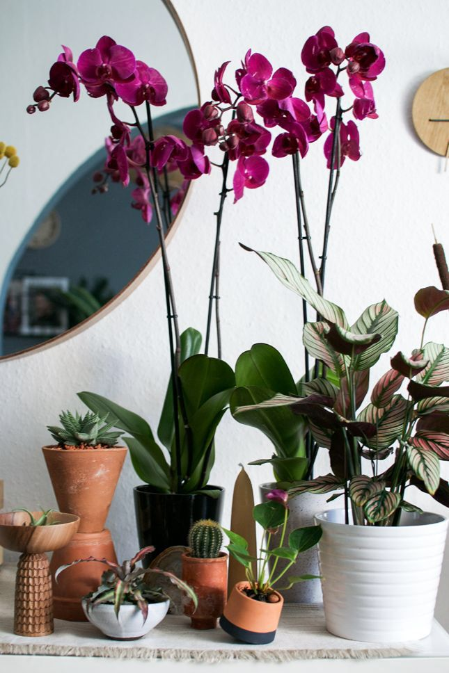 Pin by Nikolas Malstaff on -Plants // Containers | Pinterest ...