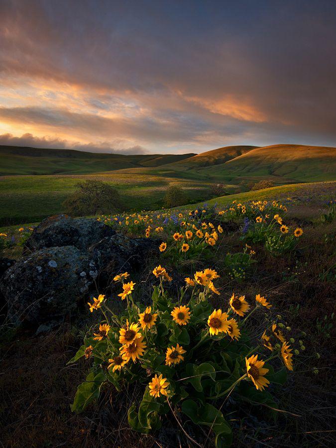 아름답다. 꽃은.  사진은, 빛은.