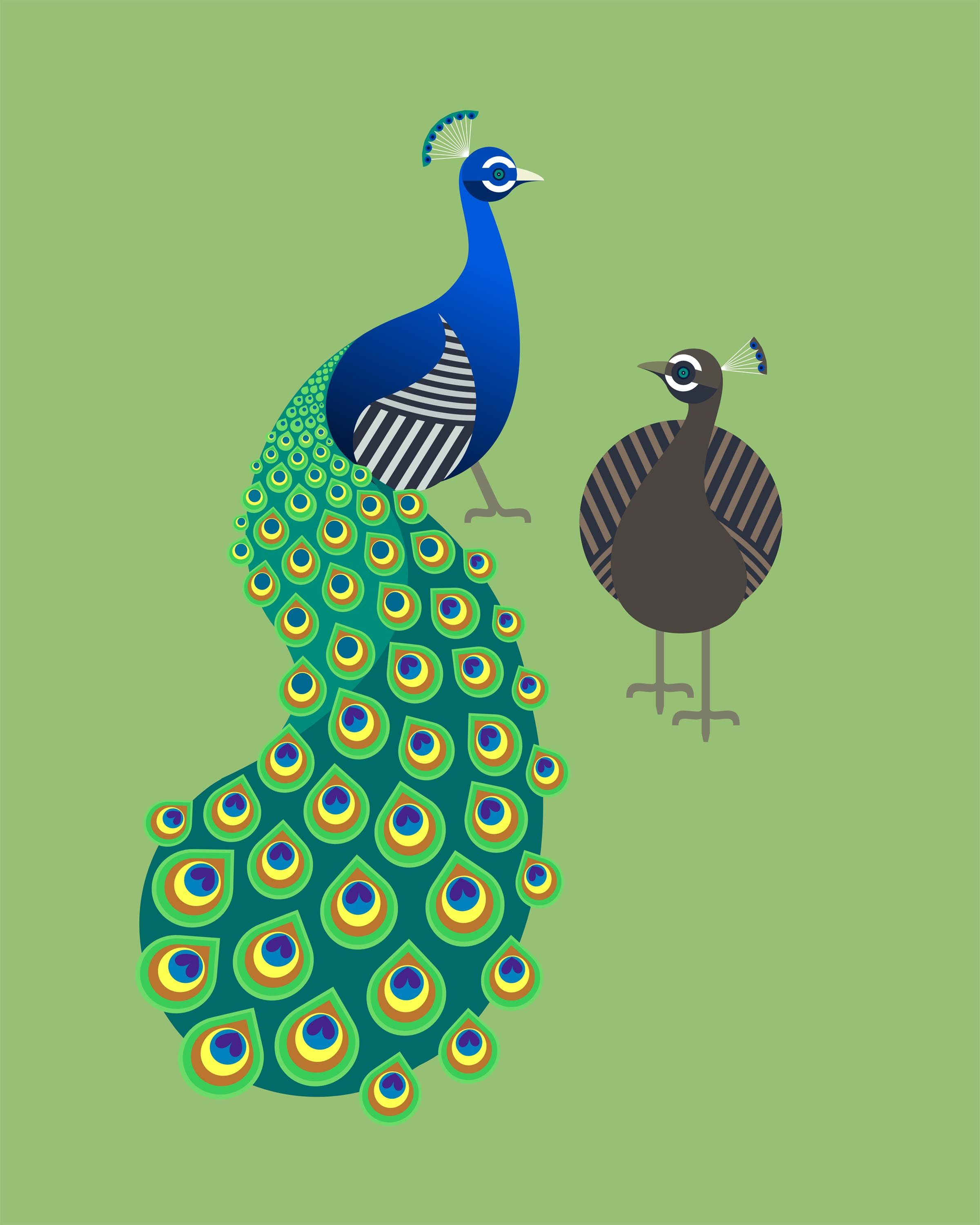 peacock and peahen by scott partridge peacock