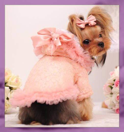 Ropa para yorkshire terrier hembra