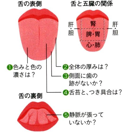 中医学的自分体質を発見 札幌市北区 石狩市の漢方相談専門薬局ならさくら薬局 医学 健康になる 漢方