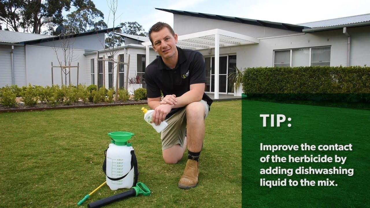Spring Lawn Renovation Series E1 – Getting on top of weeds#lawn #renovation #series #spring #top #weeds