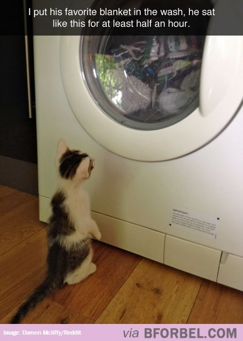 The Waiting Game Funny Animals Funny Animal Pictures Cute Animals