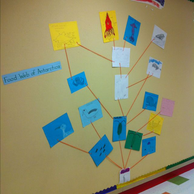 Food web after watching Happy Feet 2