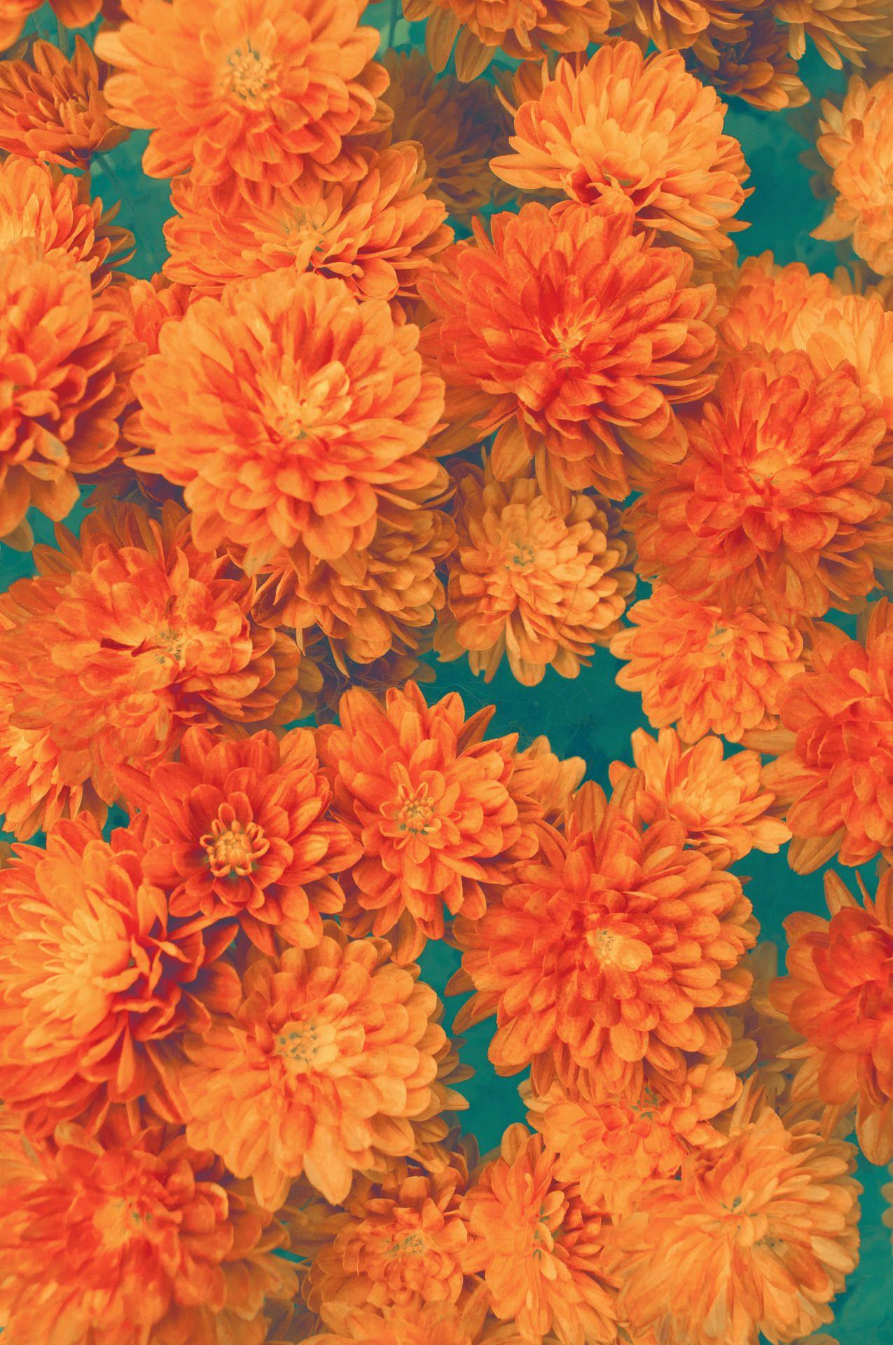 Vintage Patterns Photo Orange Aesthetic Orange Wallpaper Aesthetic Wallpapers
