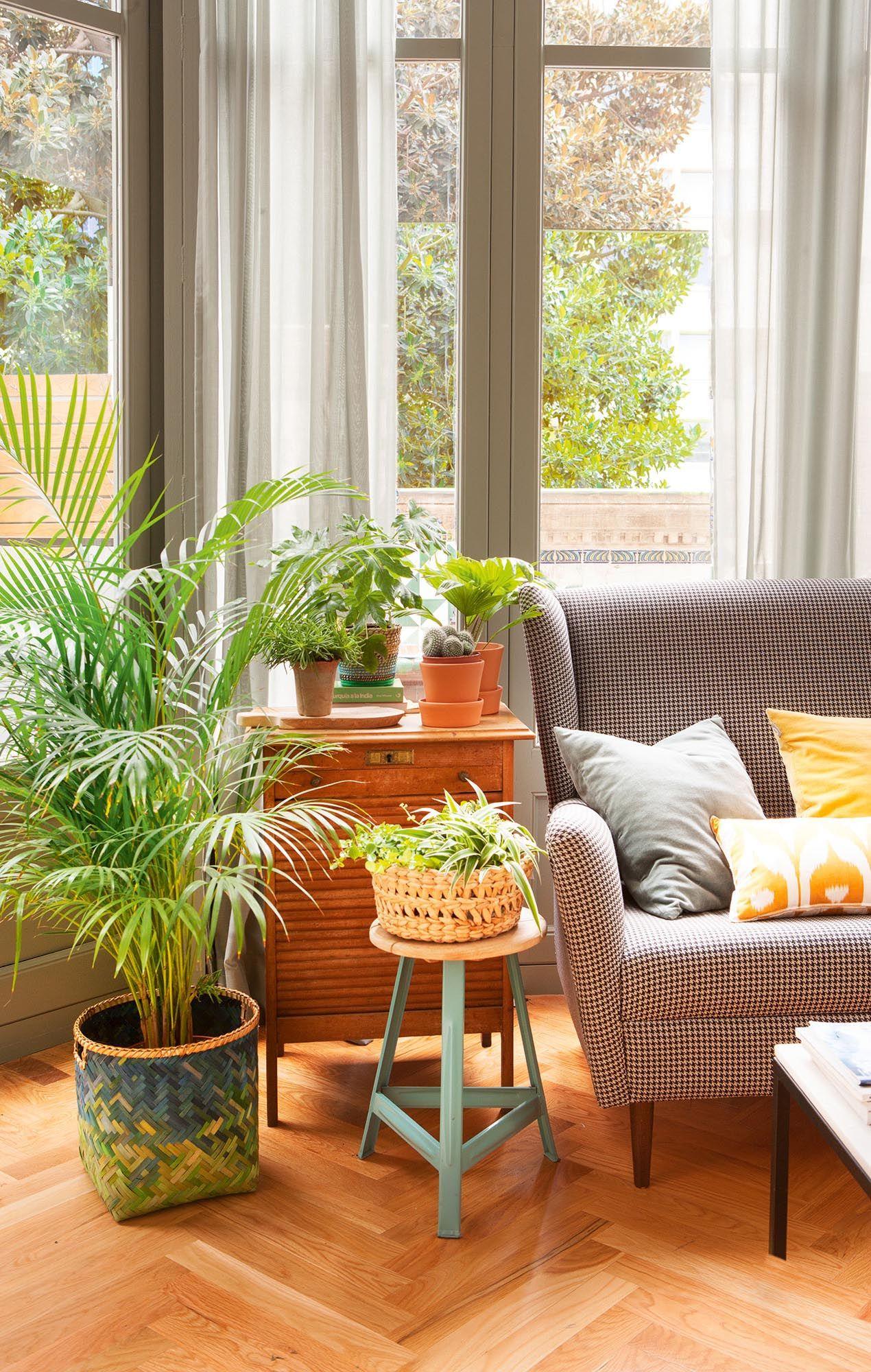 Un rinc n verde en cada estancia plantas pinterest - Plantas para salon ...