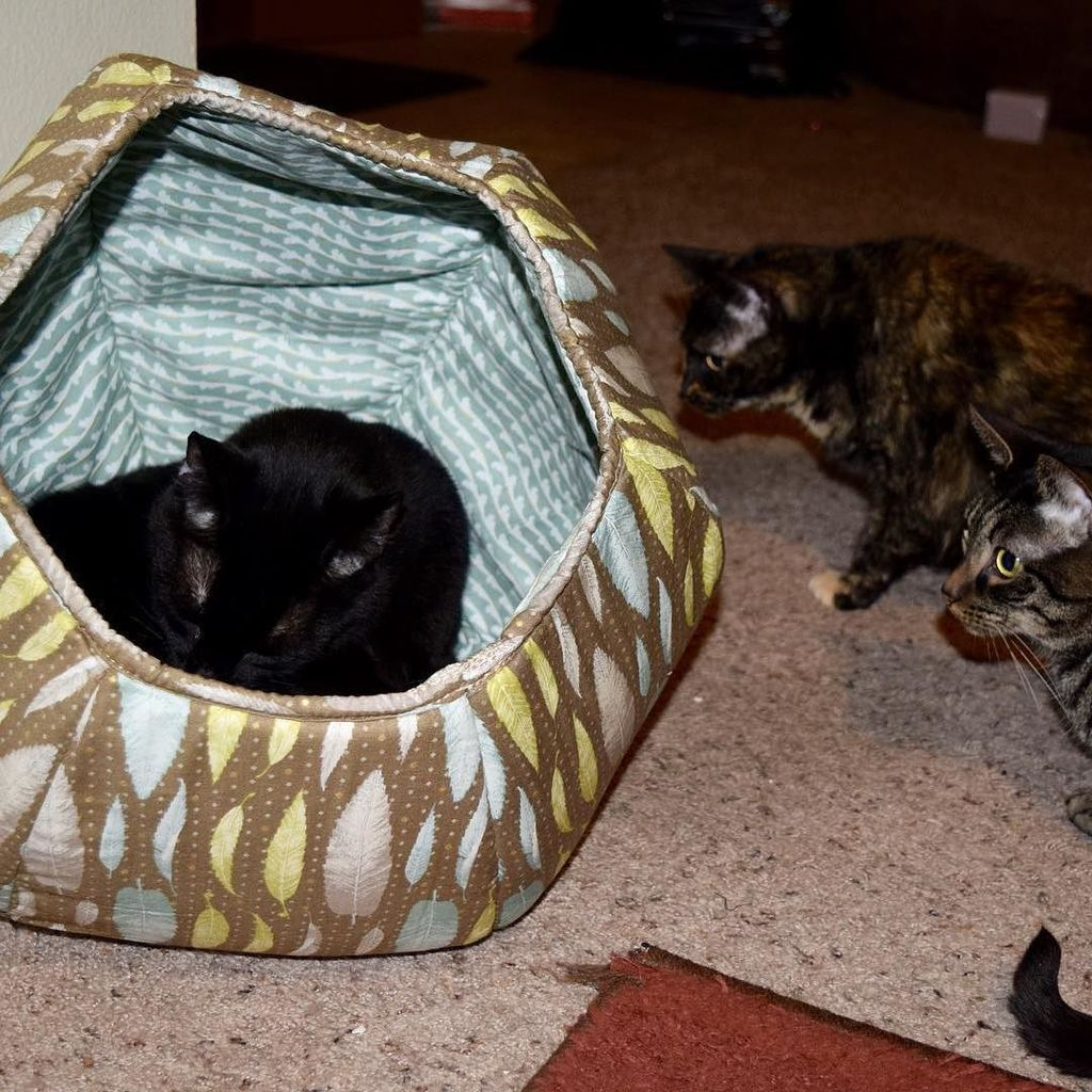 Blogger Joyce Duboise has this to say about her Cat Ball®cat bed: My cats love @TheCatBall so much that they fight over it and then wait their turn until the next one leaves! We are totally surprising them with another one this Christmas! I will have a full review up on Tuesday. Just keep an eye on my blog. Head to TheCatBall.com to grab one for your little fur babies! It's the best cat bed we have ever owned and I have had cats my entire life, so that's really saying something.