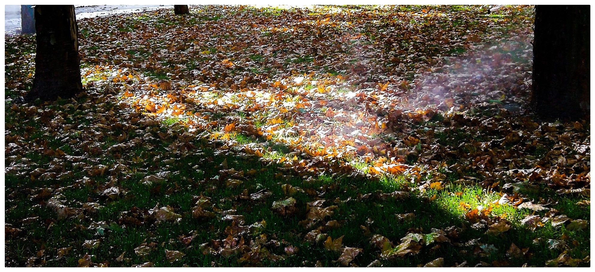 Casi otoño. Jardines del Paseo de Santa Maria de la Cabeza. Madrid ...