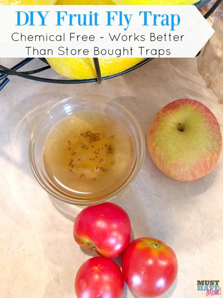 How to get rid of fruit flies without chemicals diy fruit fly trap