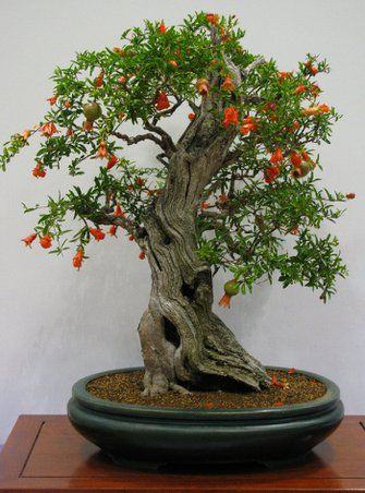 22 Best Trees For Bonsai You Should Know About #bonsaiplants