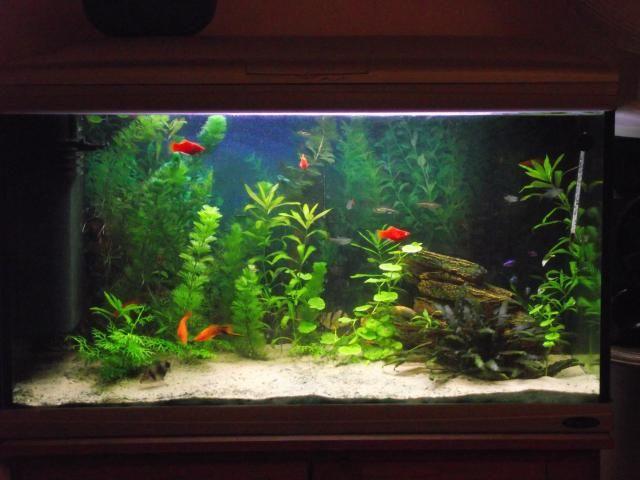 Een aquarium met tropische vissen stond jaren in de kamer          totdat hij lekte    Do you
