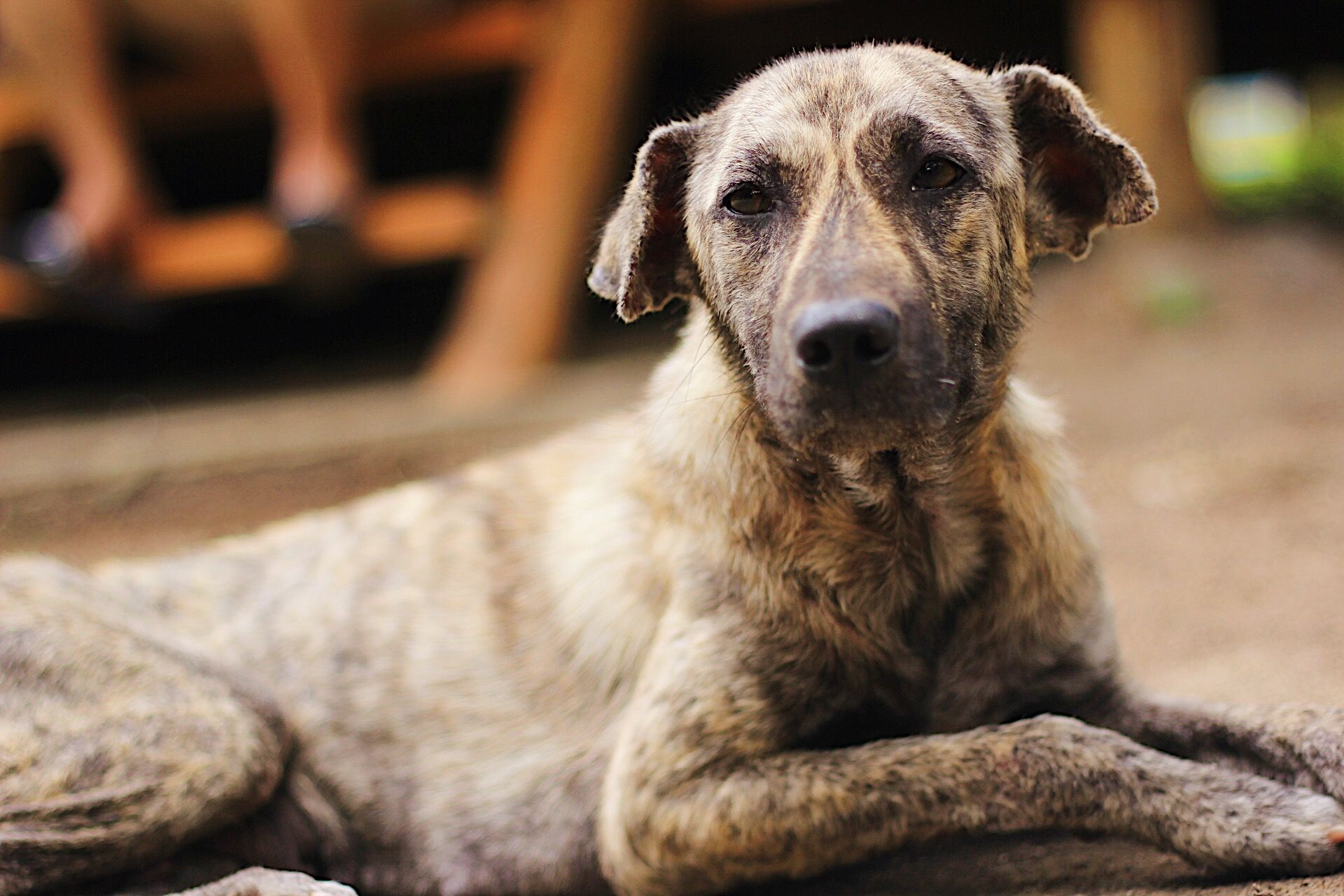 Some Mongrel Street Dogs In Davao Philippines These Are Known As