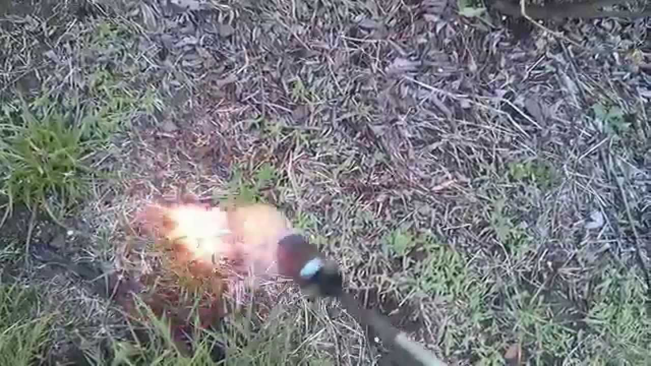 Flame weeding in the blueberry field outdoor weed propane torch