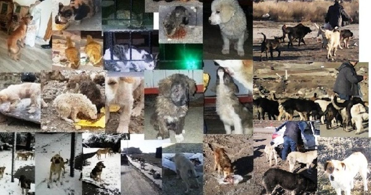 Street animals We need your help!!!! Trying to live in