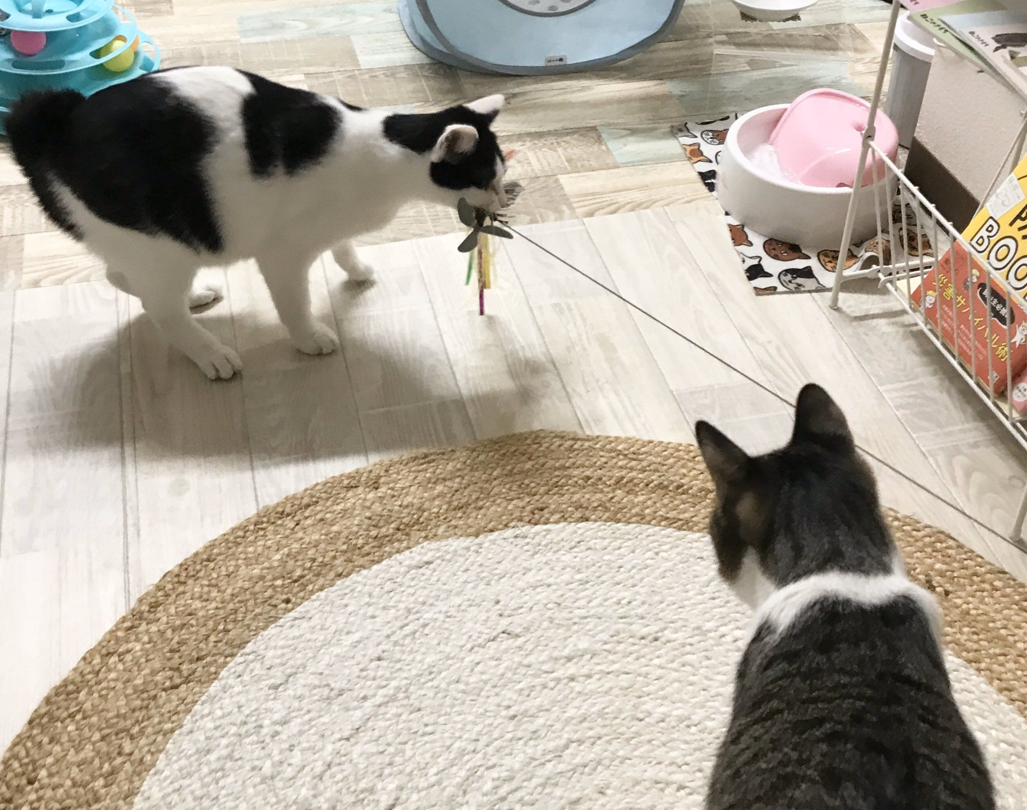 保護猫ルーム Wasao On Twitter Cat Room Kids Rugs Contemporary Rug