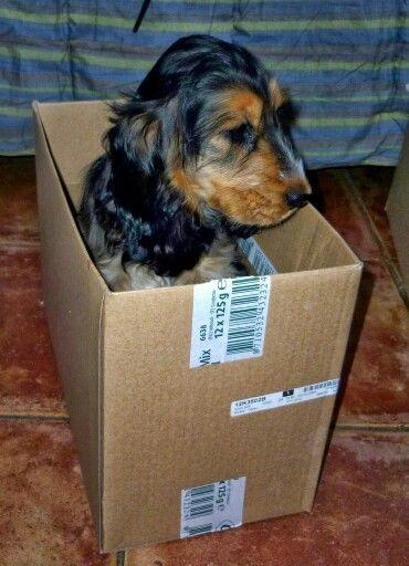 Bella in a box, nice spot!