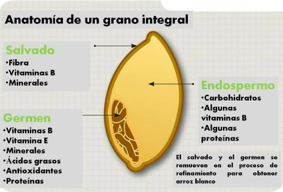 anatomía de un grano integral   Cereals   Pinterest   Cereal