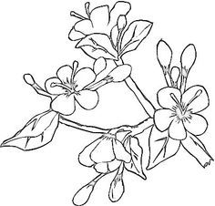 Silk Painting Cherry Blossom Google Search Flower Coloring Pages Spring Coloring Pages Tree Coloring Page