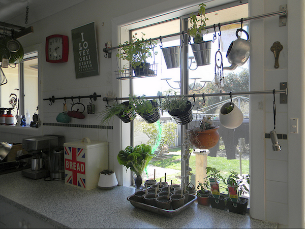 Hang your herb garden in front of your window Gardens The plant