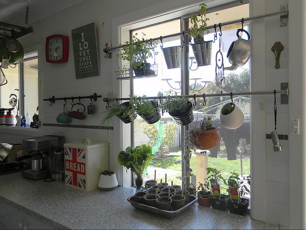 Hang Your Herb Garden In Front Of Your Window Herbs Indoors