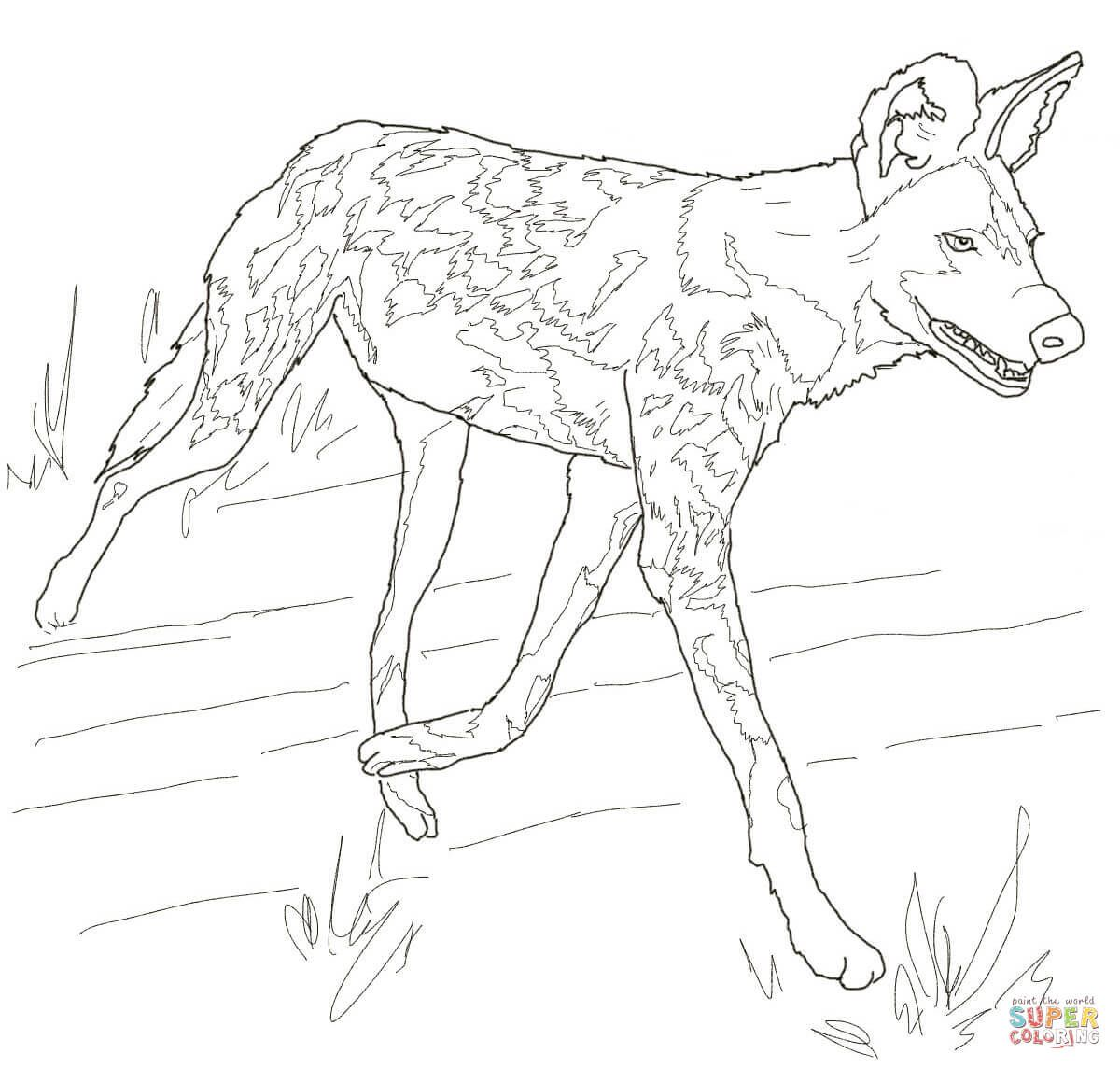 The African Painted Dog, typically roams the open plains