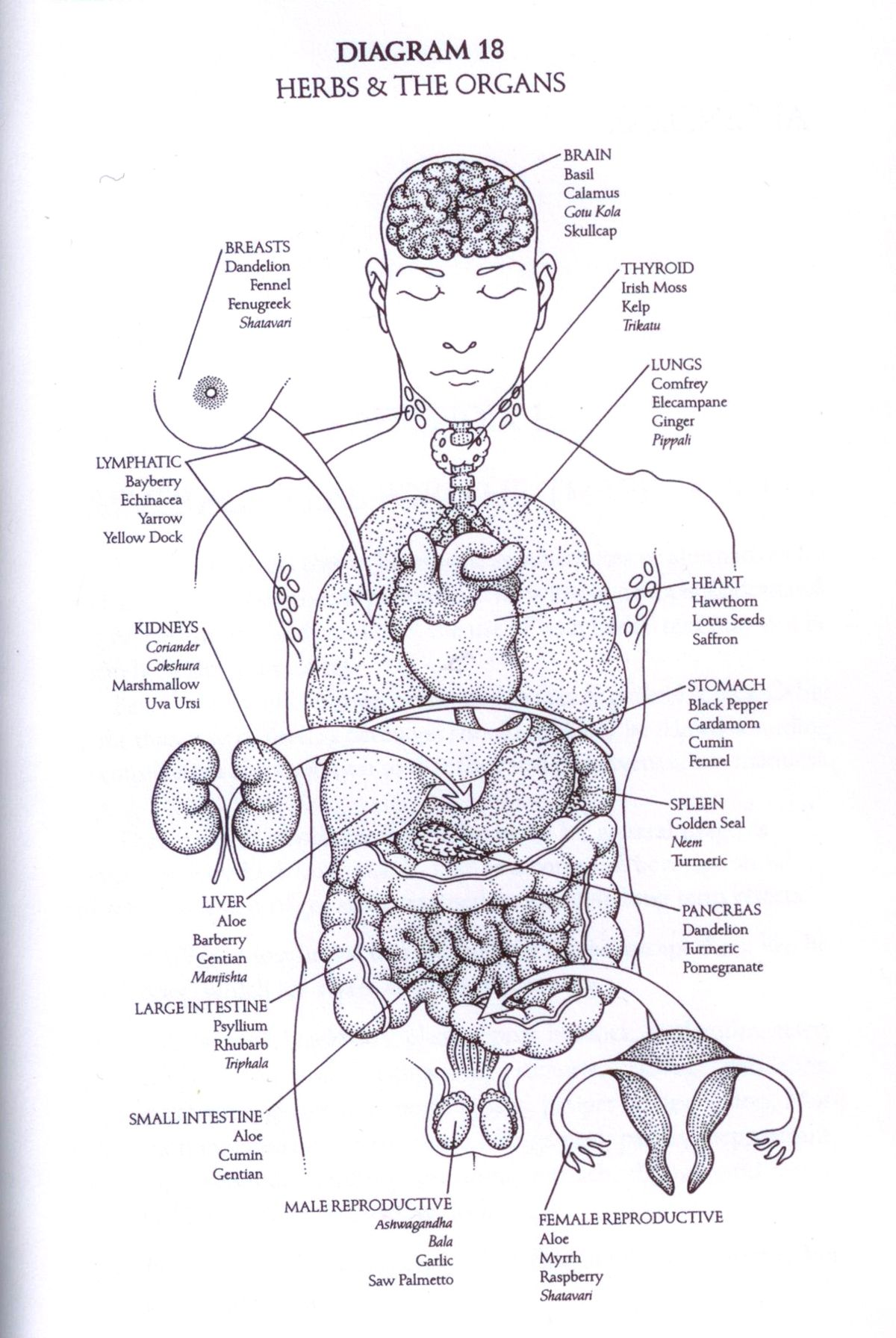 Diagram From The Book The Yoga Of Herbs