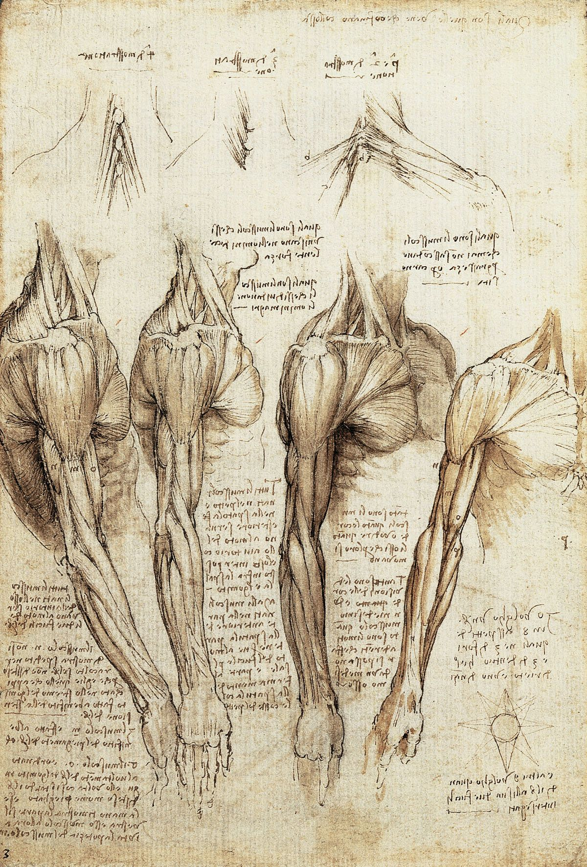 S A M S A R A - Leonardo da Vinci. 1. Studies of the arm showing ...