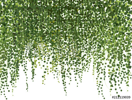 Climbing Wall Of Ivy Vector Illustration On White Background Banner And Web Background Buy This Stock Vector And Explore Ivy Wall Ivy Plants Plant Texture
