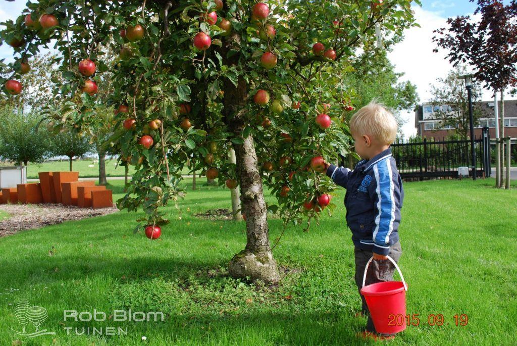 Mooie kleurige elstar appels zelf van de boom plukken garden ideas