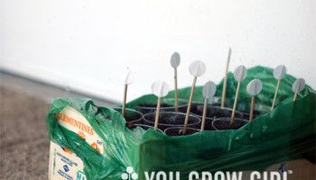 How to tell if your old seeds are still good. (aka: germination test)