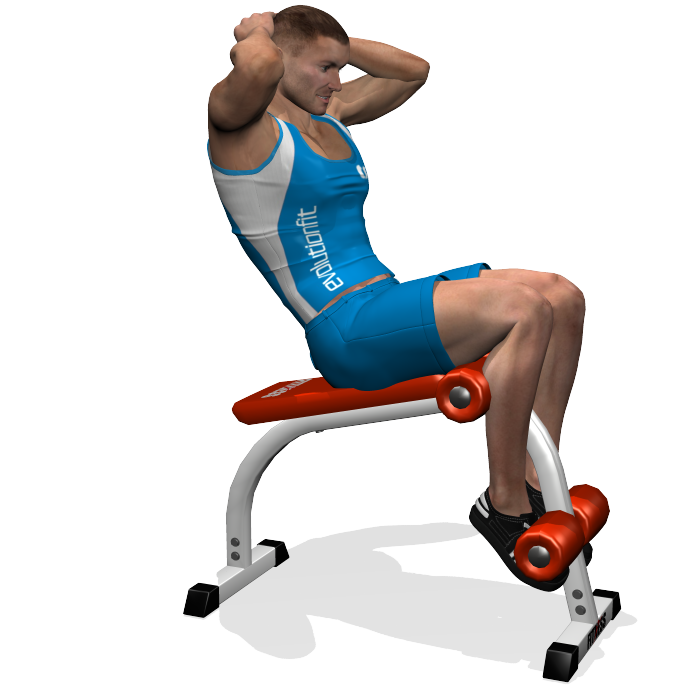 The roman bench crunch or sit-up exercise focuses on the rectus abdominis and the external oblique abdominal. The position of the legs is such that it involves the top of the quadriceps (rectus femoris), especially when the abdominals are not trained.