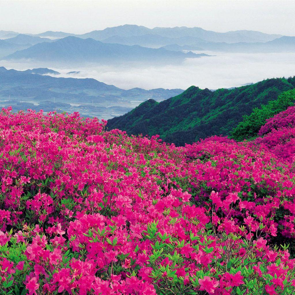 Paisaje Y Flores Para IPad Verde Rosa
