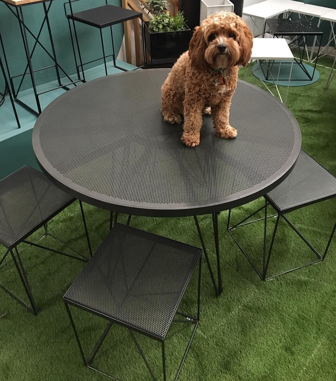 Redfox & Wilcox - Outdoor Furniture - Perforated - Dark Grey - Dog in the  Workshop - Redfox & Wilcox - Outdoor Furniture - Perforated - Dark Grey - Dog