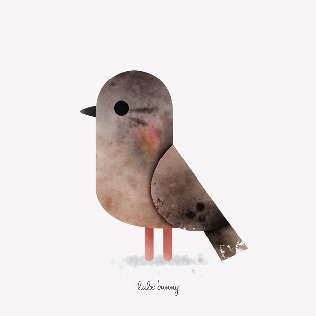 ornithology - eared dove - www.lulibunny.com - © 2016