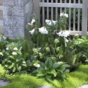 White flower shade plants for end of front deck moms yard white flower shade plants for end of front deck mightylinksfo
