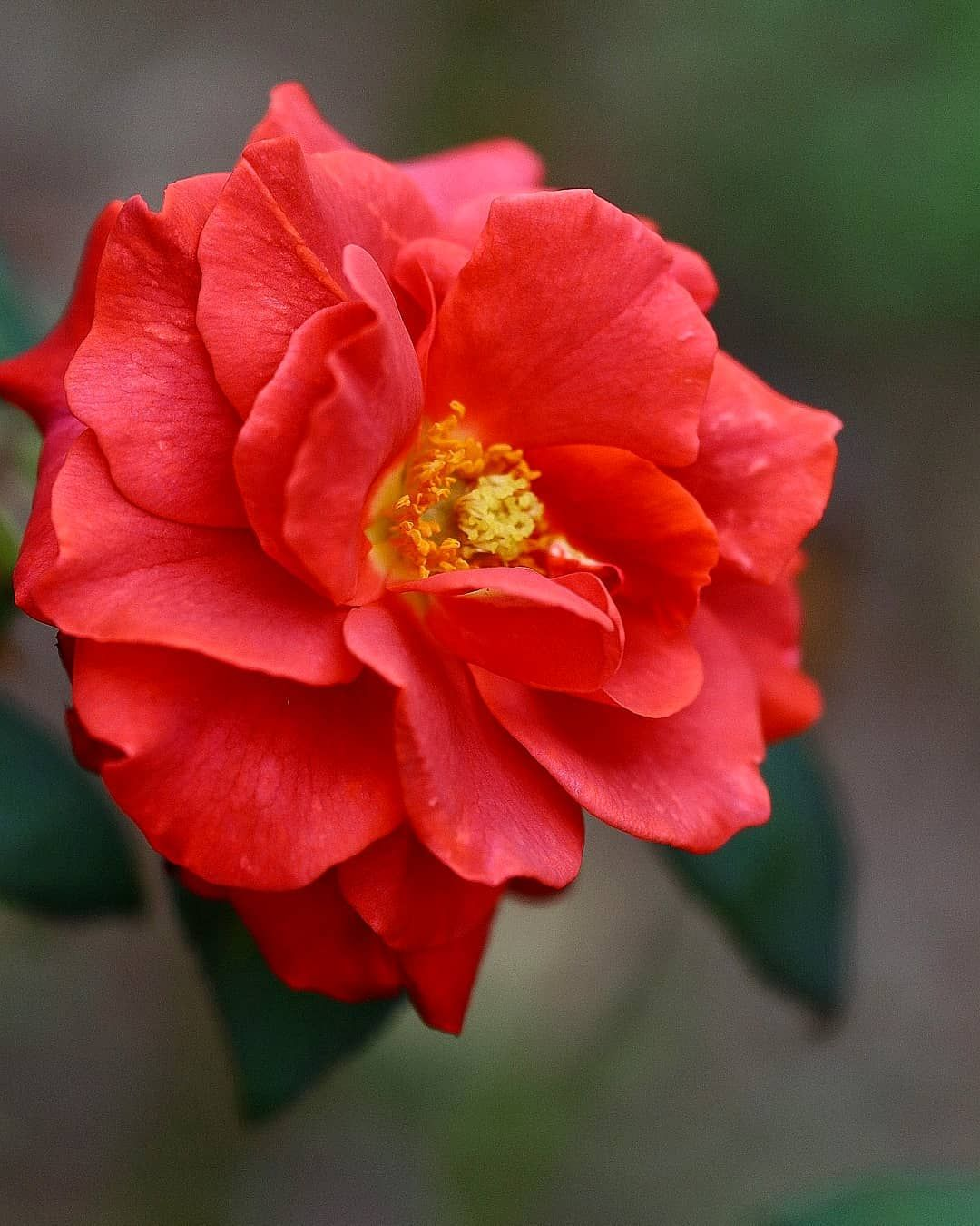 "meiko🦋風花🦋 on Instagram: ""🦋🌹🌸🌺🌼🌻☘️🦋🌹🌸 . #9vaga_rose9 #flower_igers #9vaga_flowersart9 #9vaga_3flowers9 #picc_roses #healing_roses_ #gw_roses #lory_roses…"""