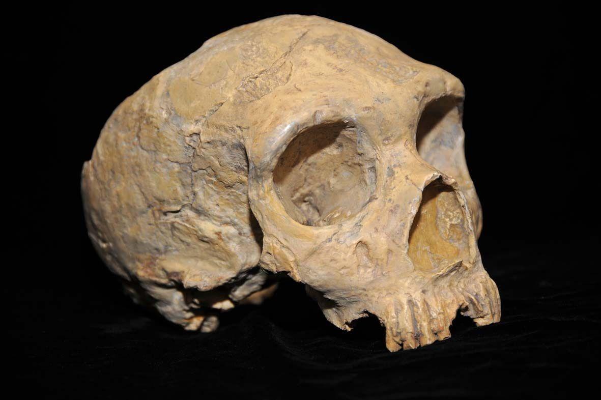 Research Team Discovers Immune Gene In Neanderthals