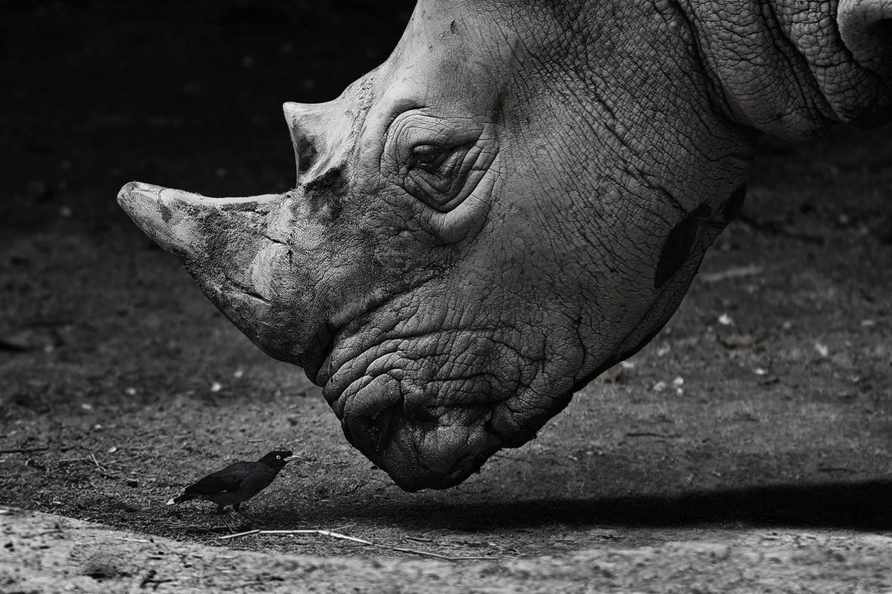 Лучшие чёрно-белые снимки фотоконкурса Siena International ...