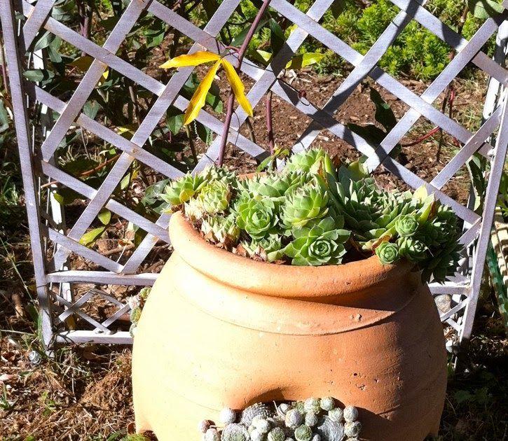 Craigslist winter garden fl winter garden home and