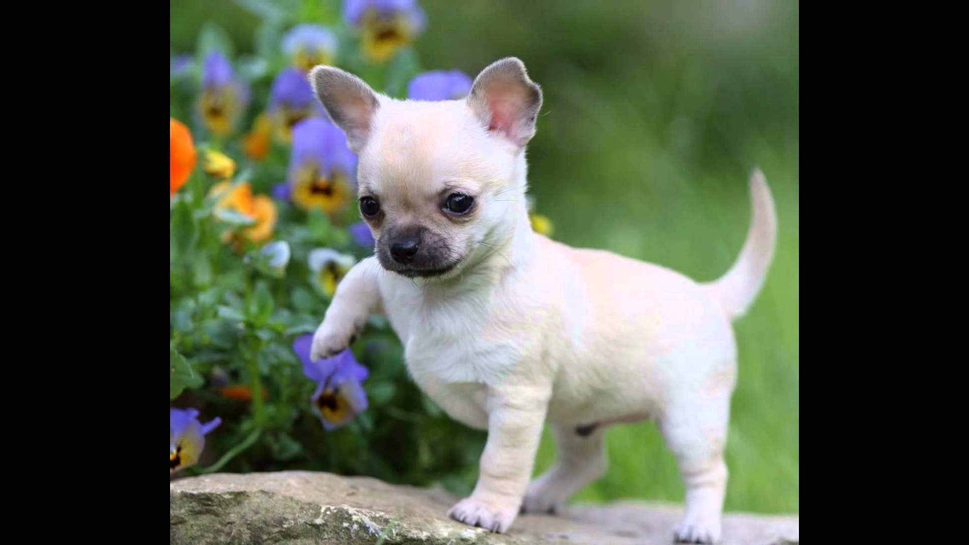Resultado De Imagen De Preguntas Para Amigas Cutest Small Dog