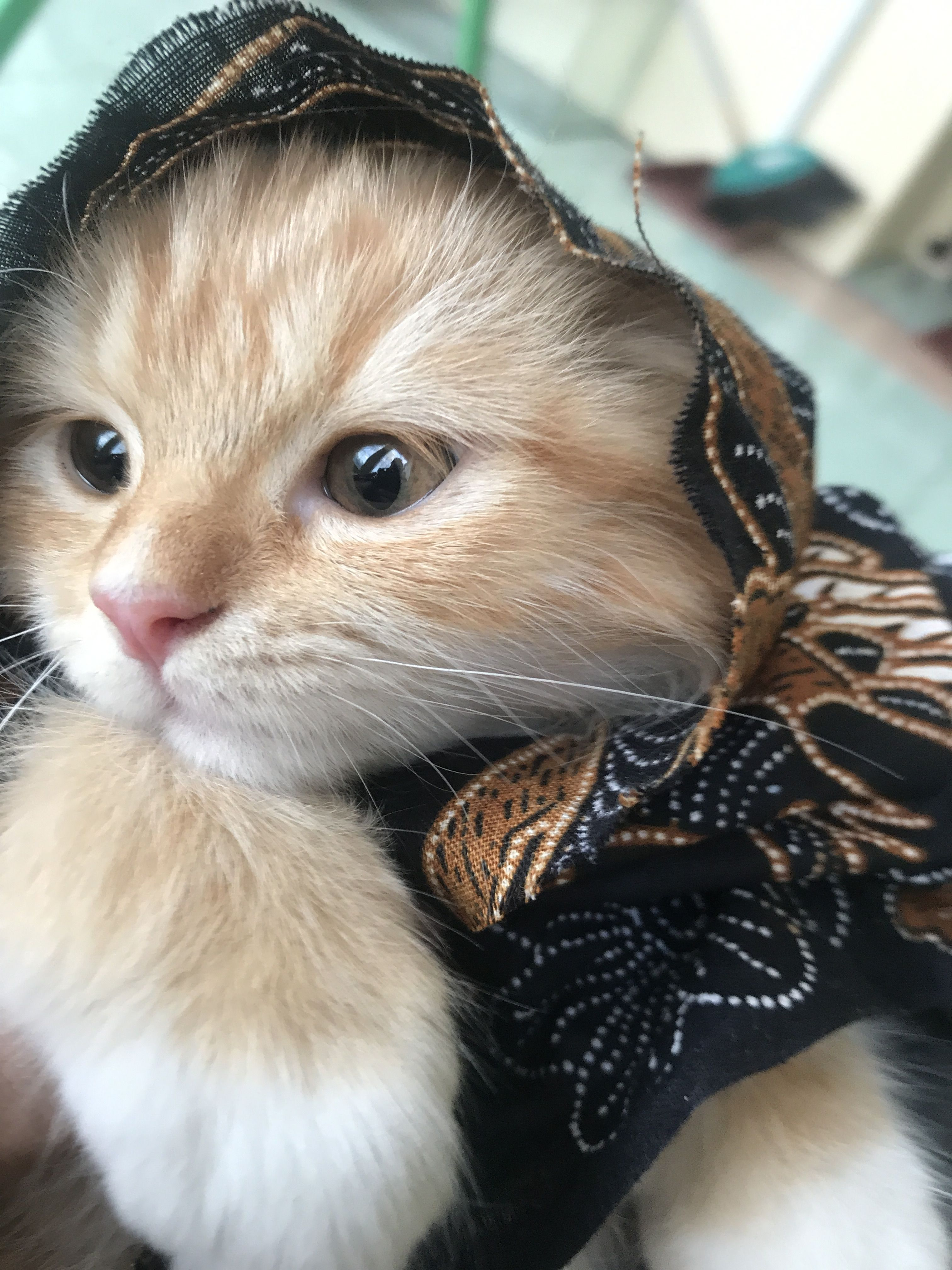 So sweet... Cute baby cats, Pretty cats, Cute cats