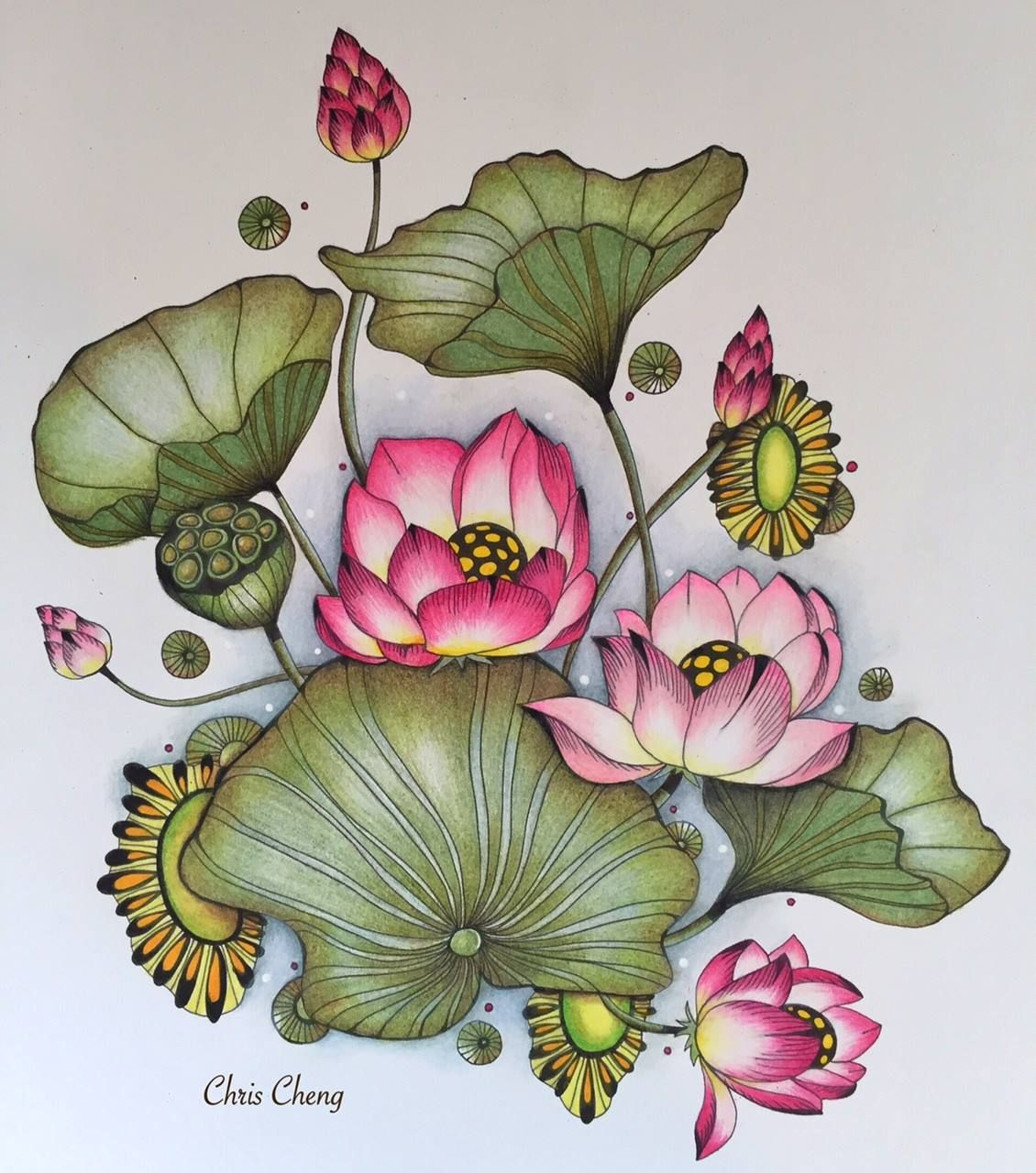 Water lily flower coloring pages - Coloring Book Botanical Wonderland By Rachel Reinert Studio