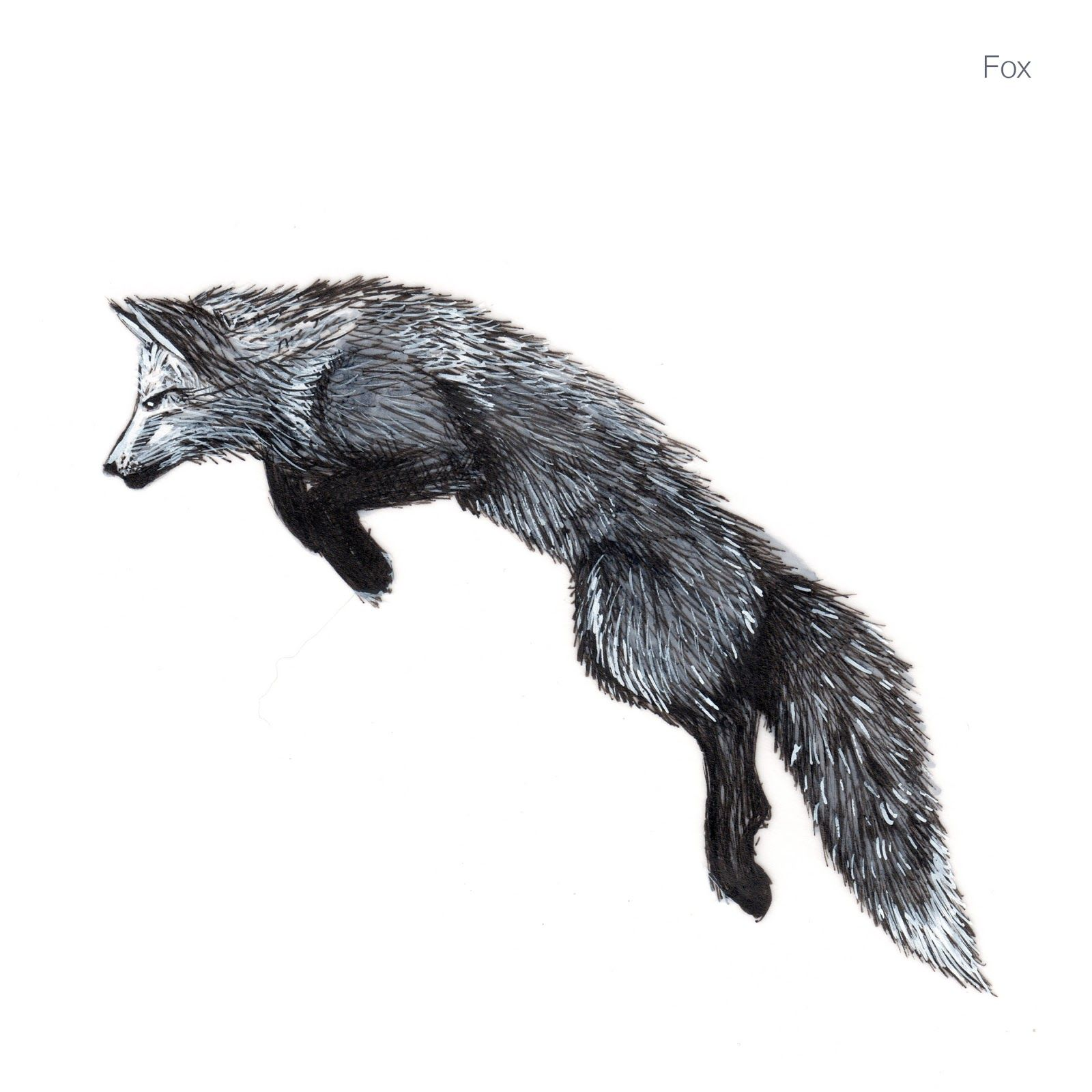 fox drawing   Displaying 19> Images For - White Fox ...