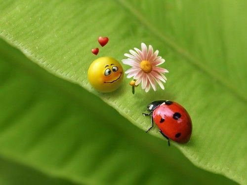 animales dulces y tiernos con cosas de personas - Buscar con Google