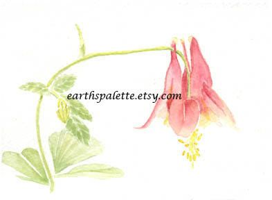 Flower painting pink columbine 5x7 original watercolor painting floral painting nature wall art earthspalette via Etsy