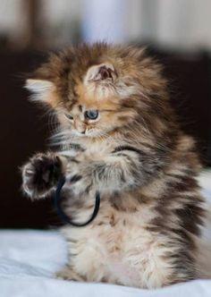 Kitten. It looks like my kitty when I was a little kid Booful, I think it meant beautiful.